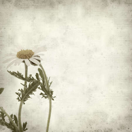 canarian: textured old paper background with  canarian marguerite daisy Stock Photo