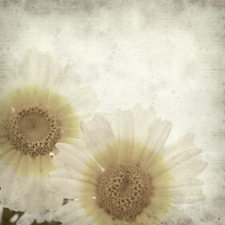 textured old paper background with garland chrysanthemum photo