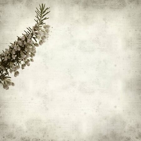 heath: textured old paper background with Erica arborea, tree heath