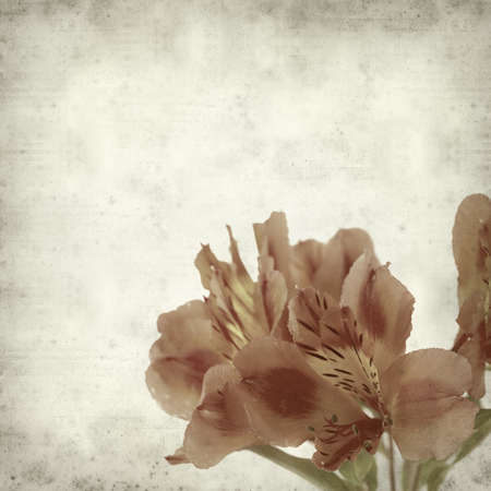 alstroemeria: textured old paper background with Alstroemeria