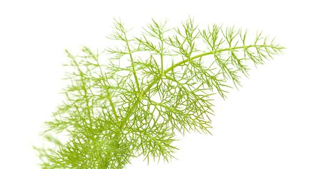 filiform: freen lacy fennel leaf isolated on white background Stock Photo
