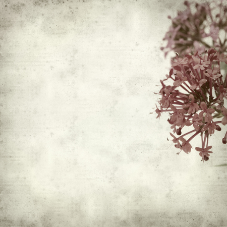 textured old paper background with red valerian