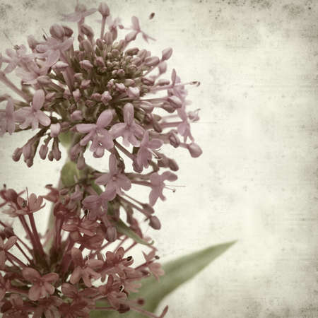 valerian plant: textured old paper background with red valerian