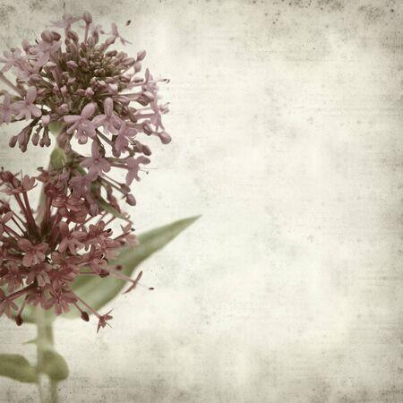 valerian: trama vecchio sfondo di carta con valeriana rossa