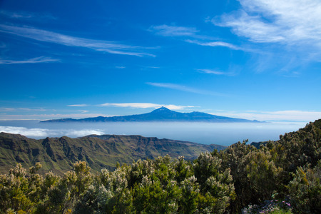 erica: Tenerife floating on te sea of clouds, view from La Gomera, Flowering bushes of Erica arborea, tree heather, on the foreground