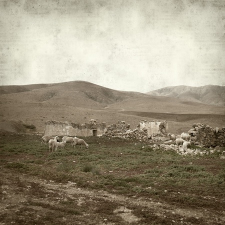 animal origin: textured old paper background with landscape of Fuerteventura