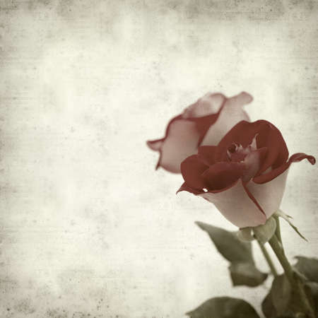 textured old paper background with two-toned roses photo