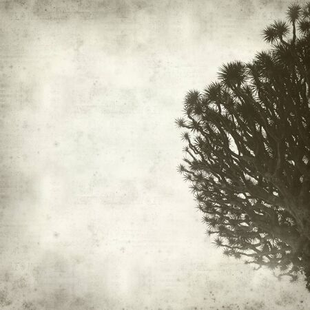 textured old paper background with Canary Islands Dragon Tree photo