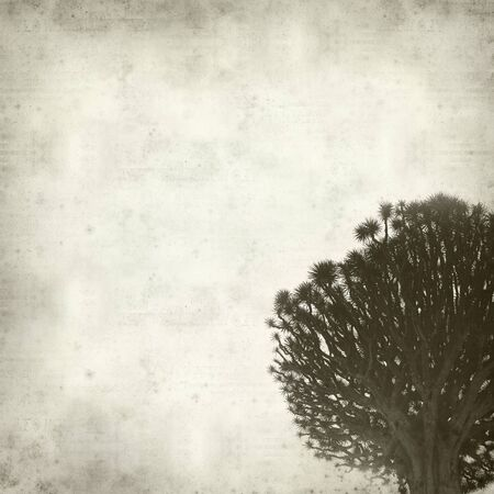 pino: textured old paper background with Canary Islands Dragon Tree Stock Photo