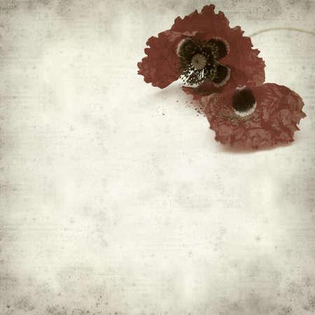 wilting: textura de fondo de papel viejo con marchitamiento amapola roja