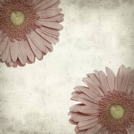 textured old paper background with gerbera photo