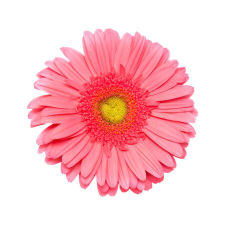 commercially: Gerbera flower isolated on white background