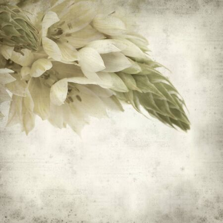 textured old paper background with start of bethlehem flowers photo
