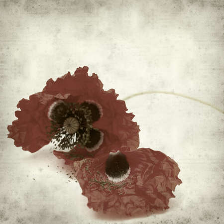 wilting: textured old paper background with red poppy wilting Stock Photo