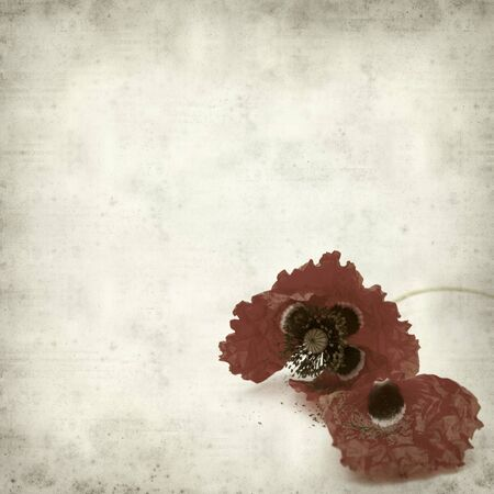 textured old paper background with red poppy wilting photo