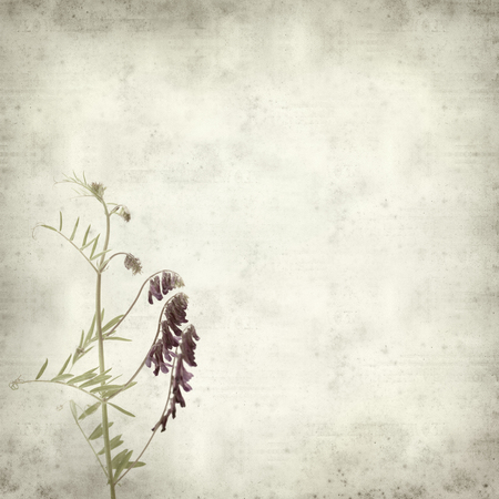 vetch: textured old paper background with fodder vetch Stock Photo
