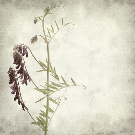 fodder: textured old paper background with fodder vetch Stock Photo