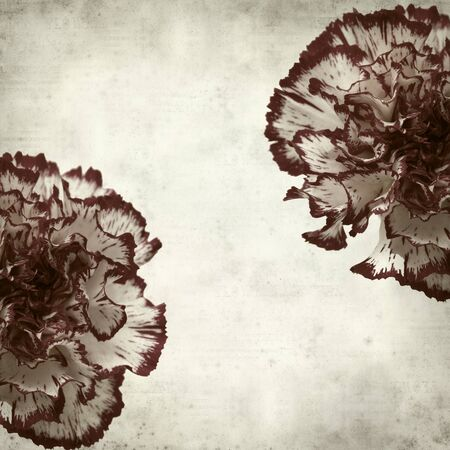 textured old paper background with variegated carnation flower photo