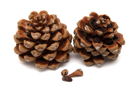 naturalized: cone of stone pine, Pinus pinea, with some of the nuts still in, isolated on white background Stock Photo