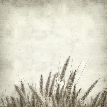 cat tail: textured old paper background with cat tail grass Stock Photo