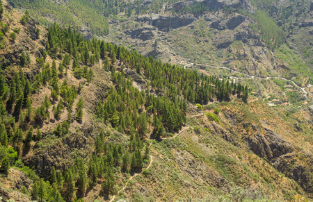 hiking path: Gran Canaria, Caldera de Tejeda, Canarian Pine trees forming a wedge shape on  slope of the caldera, Hiking path Stock Photo