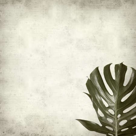 monstera leaf: textured old paper background with monstera plant leaf Stock Photo