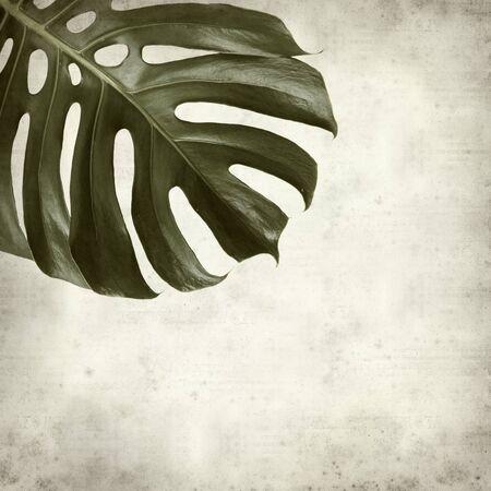 hojas secas: textura de fondo de papel viejo con hoja de la planta de monstera