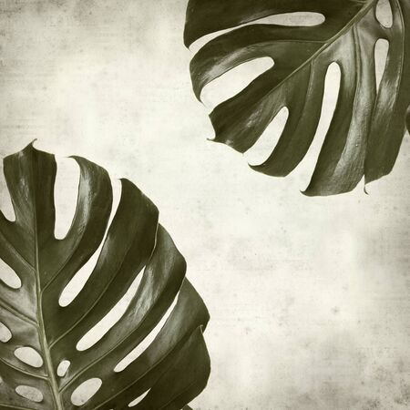 dry leaves: textured old paper background with monstera plant leaf Stock Photo