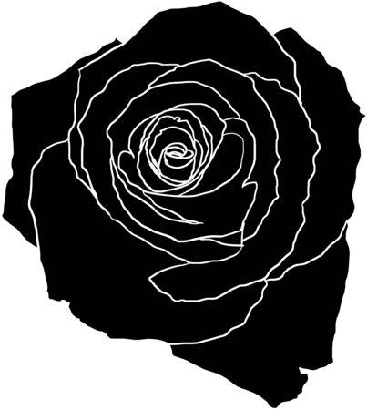 spiralling: black rose on white with white outlines, illustration