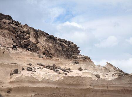트 벤츄라, 카나리아 제도, Jandia의 서쪽 해안, 침식 된 사암 구조물에 염소