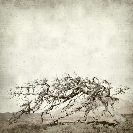 textured old paper background with old dead fig free on Fuerteventura Canary Islands