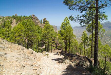 camino: Gran Canaria, footpath to Roque Nublo, camino real Stock Photo