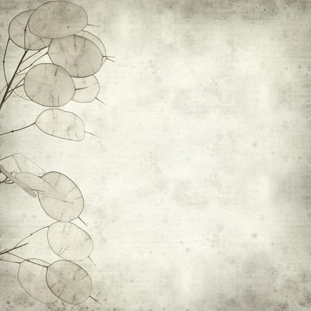 seedpod: textured old paper background with Lunaria annua, silver dollar plant Stock Photo