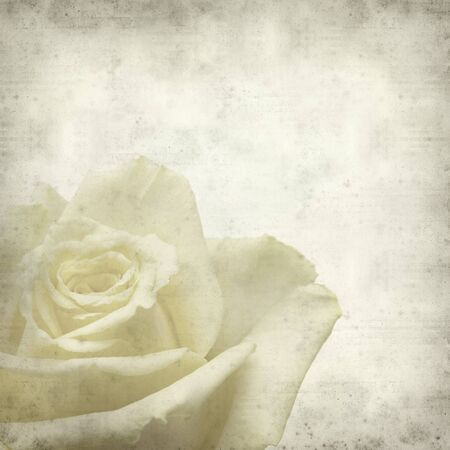 textured paper: textured old paper background with pale yellow rose