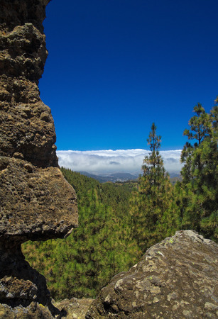 blanketed: Inland Central Gran Canaria, Las Cumbres, the highest areas of the islands, view over treetops towards Panza de Burro, Donkey Belly, cloud cover almost always present at the north of the Canary Islands Stock Photo