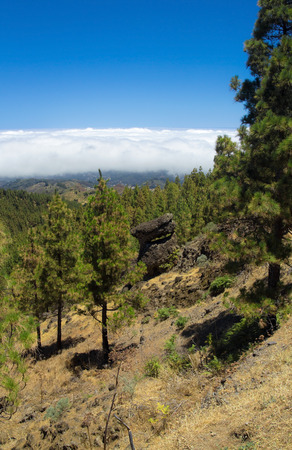 burro: Inland Central Gran Canaria, Las Cumbres, the highest areas of the islands, view over treetops towards Panza de Burro, Donkey Belly, cloud cover almost always present at the north of the Canary Islands Stock Photo