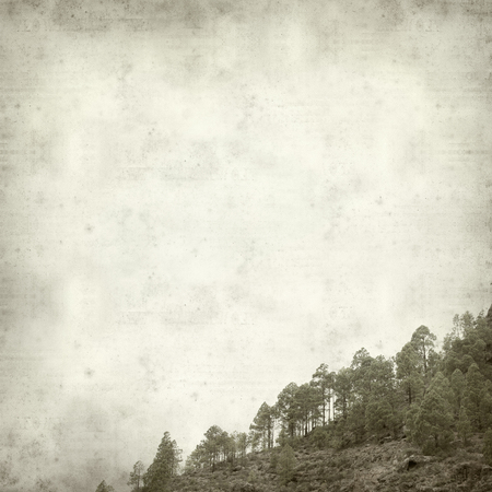 canarian: textured old paper background with Canarian Pine trees