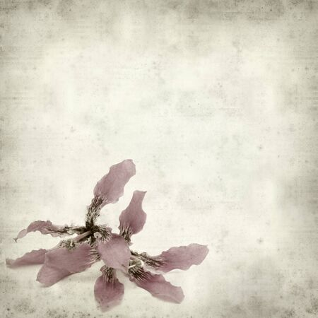 textured old paper background with silk floss tree flower