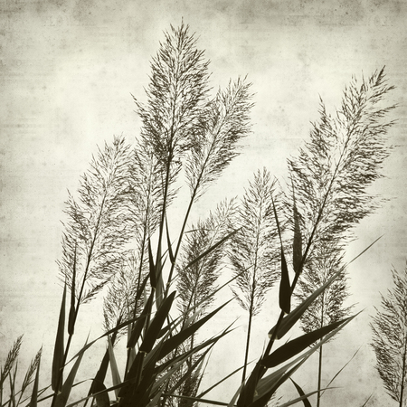 textured paper: textured old paper background with reeds