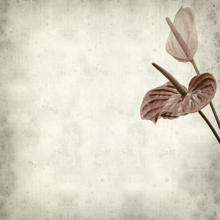 anthurium: textured old paper background with exotic anthurium flower