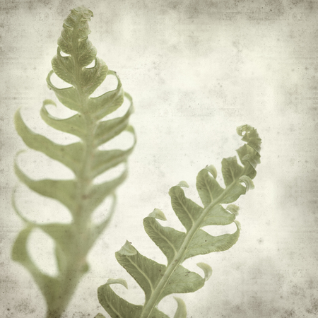 unfurling: textured old paper background with fern leaf unfurling Stock Photo