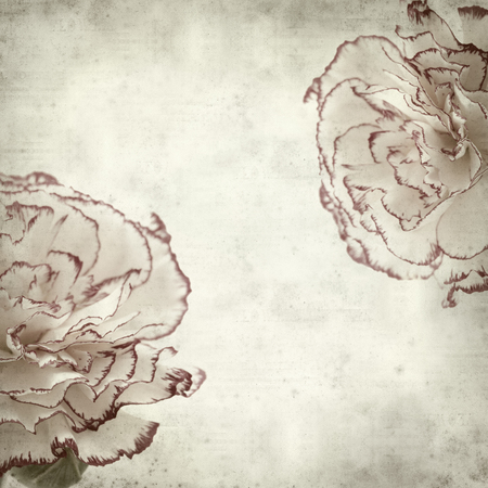 spot the difference: textured old paper background with variegated carnation flower Stock Photo