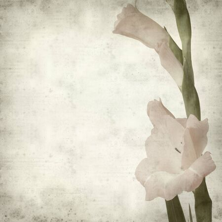 gladiolus: textured old paper background with pale gladiols flowering spike