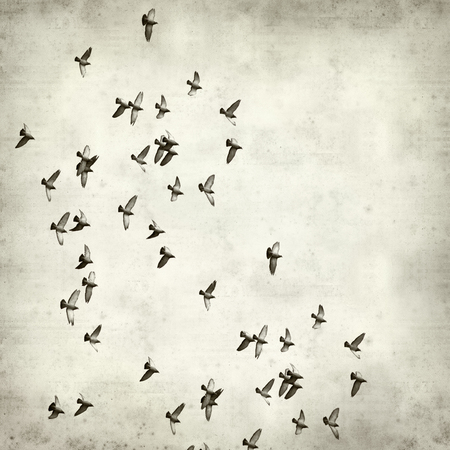 textured paper: textured old paper background with flock of pigeons