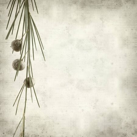 endemic: textured old paper background with Asparagus arborescens, plant endemic to Canary Islands Stock Photo