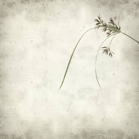 textured paper: textured old paper background with sedge plant