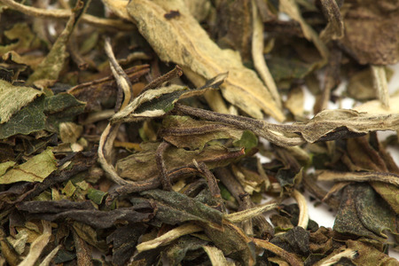 plant antioxidants: white tea  Pai Mu Tan leaves food stuff background
