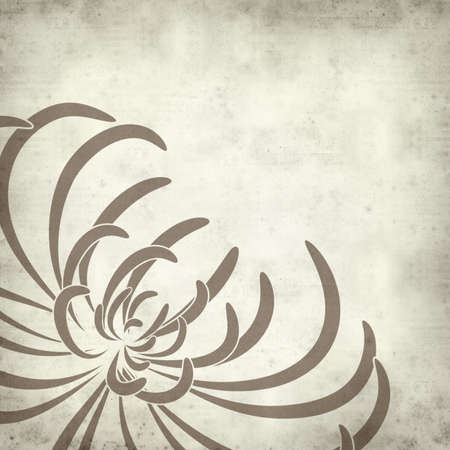 dry flower: textured old paper background with spider chrysanthemum illustration