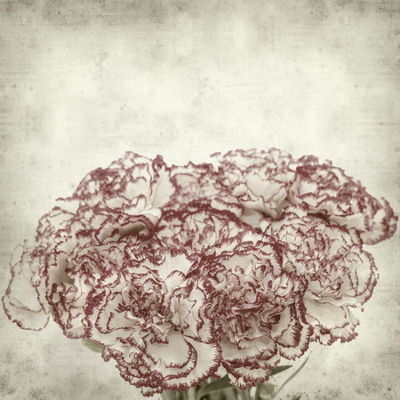 textured paper: textured old paper background with carnation flower