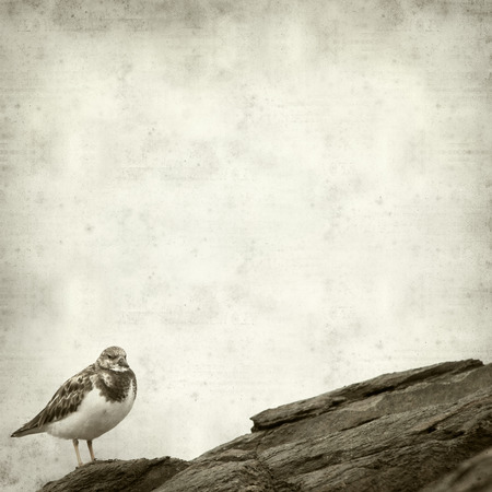 textured paper: textured old paper background with turnstone bird Stock Photo